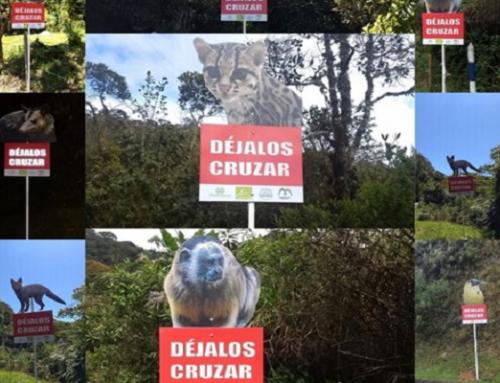 Trabajamos en la prevención del atropellamiento de fauna silvestre