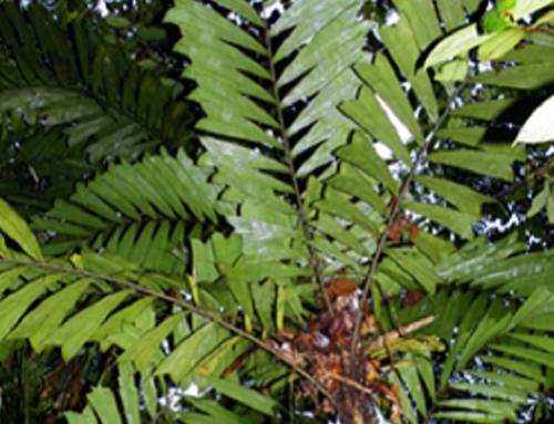 Con las Vedas protegemos las especies de flora vulnerables del territorio Cornare