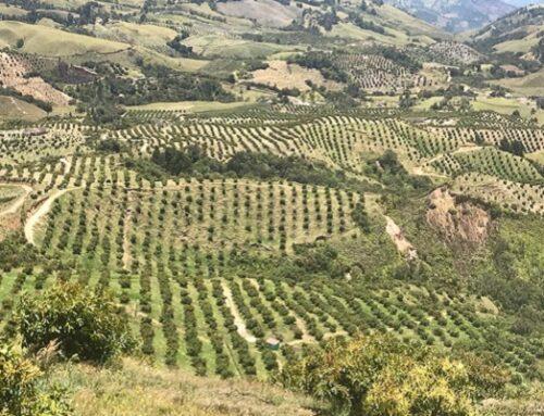 Cornare y Corpohass firman convenio para la sostenibilidad ambiental en el sector productor de aguacate Hass
