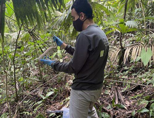 Área Metropolitana del Valle de Aburrá y Cornare aúnan esfuerzos para la conservación de la fauna silvestre