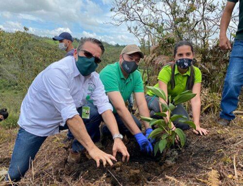 2 millones de árboles nuevos reverdecen la jurisdicción de Cornare ¡Y vamos por más!
