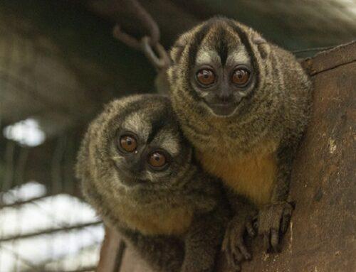 """""""Déjalos Volar"""" fue el mensaje con el que este año se promovió la protección de la fauna silvestre en Marinilla, La Ceja y El Retiro"""