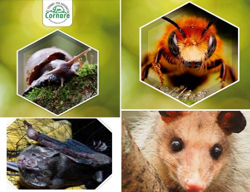 Protocolos de Manejo: Caracol Africano, Murciélagos, Zarigüeyas y Abejas Africanas