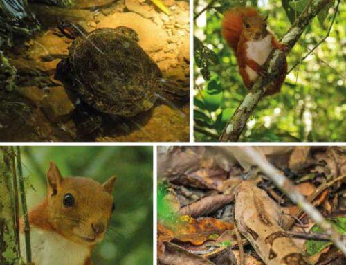 43 animales de la fauna silvestre regresaron a su hábitat natural en la región Cornare