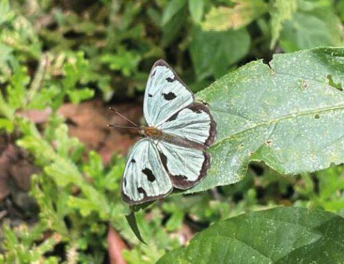 Recorremos el territorio para construir la primera guía de mariposas del Oriente Antioqueño