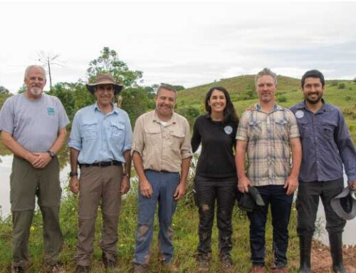 Inicia piloto experimental de inmunocastración con GonaCon en 24 de los hipopótamos del Magdalena Medio